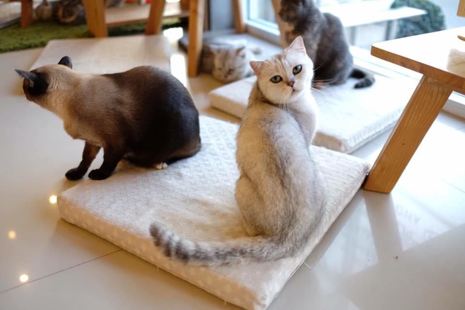 Makura Cat Cafe (13)