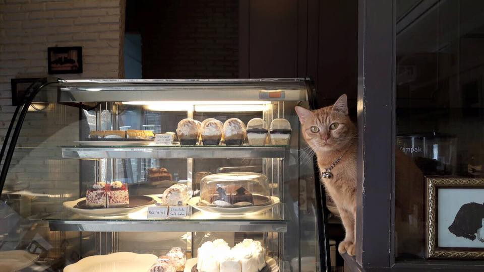 Purr Cat Cafe Club (9)